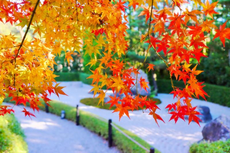 美しきもの、旨しものを楽しむ 秋のお食事付き特別拝観プラン
