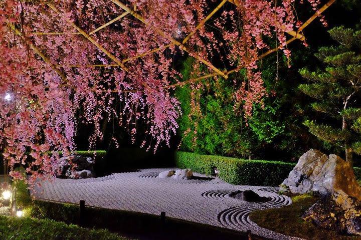 妙心寺退蔵院 春